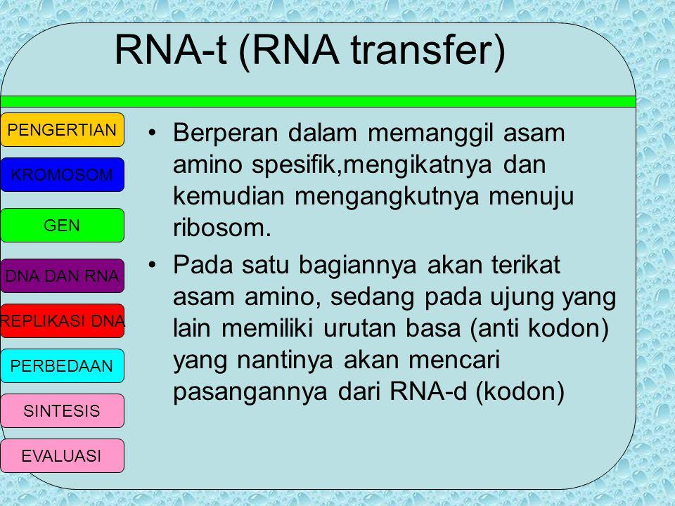 PENGERTIAN KROMOSOM GEN DNA DAN RNA REPLIKASI DNA PERBEDAAN SINTESIS EVALUASI RNA- r atau RNA ribosom Merupakan penyusun ribosom dengan bentuk yang be