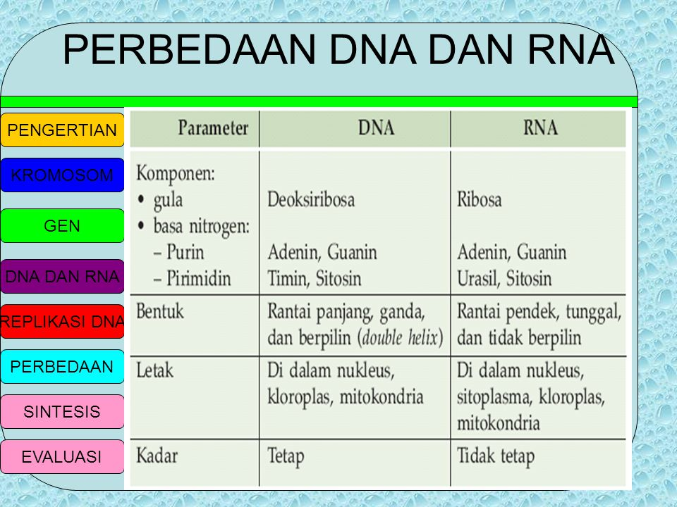 PENGERTIAN KROMOSOM GEN DNA DAN RNA REPLIKASI DNA PERBEDAAN SINTESIS EVALUASI RNA-t (RNA transfer) Berperan dalam memanggil asam amino spesifik,mengik