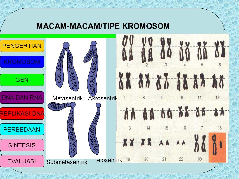PENGERTIAN KROMOSOM GEN DNA DAN RNA REPLIKASI DNA PERBEDAAN SINTESIS EVALUASI KROMOSOM b. Kromomer, yaitu struktur berbentuk manik yg merupakan gabung