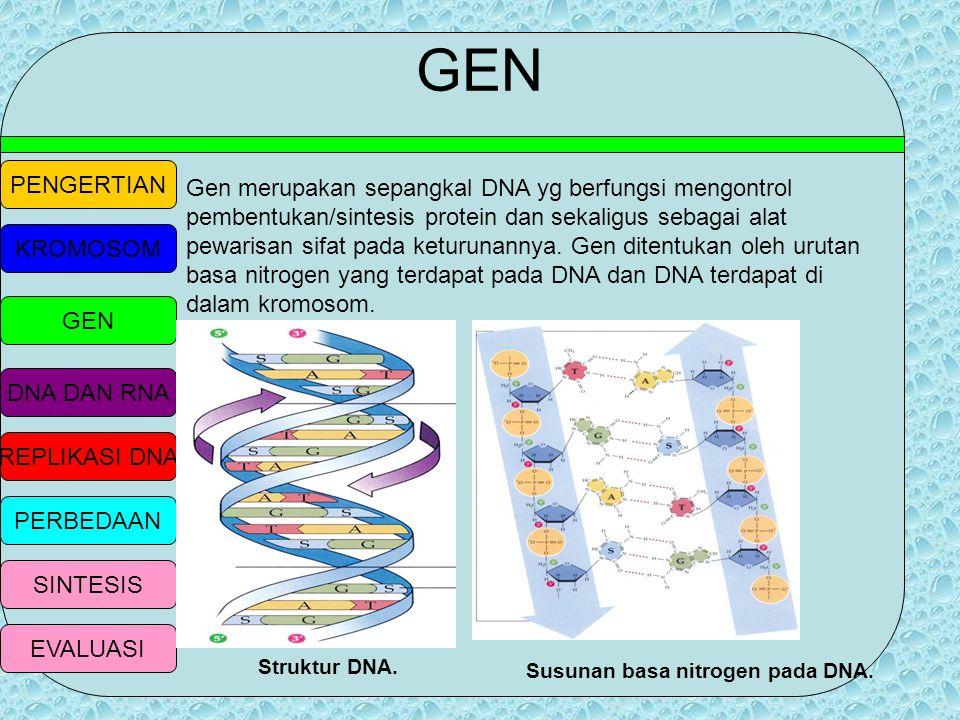 PENGERTIAN KROMOSOM GEN DNA DAN RNA REPLIKASI DNA PERBEDAAN SINTESIS EVALUASI MACAM-MACAM/TIPE KROMOSOM Metasentrik Submetasentrik Akrosentrik Telosen