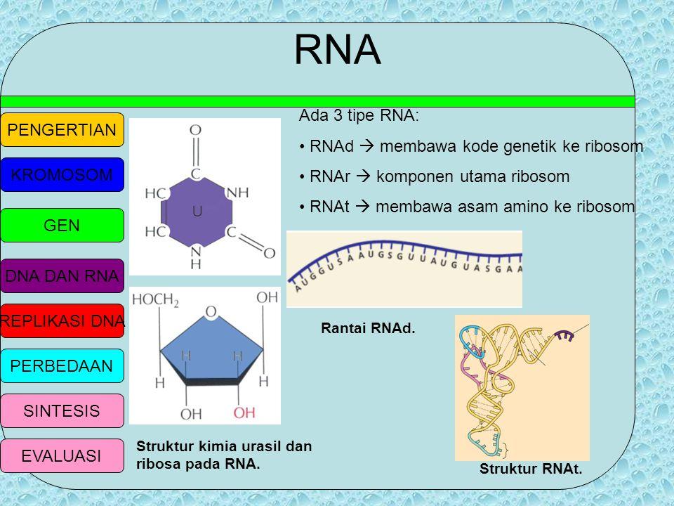 PENGERTIAN KROMOSOM GEN DNA DAN RNA REPLIKASI DNA PERBEDAAN SINTESIS EVALUASI FUNGSI TRANKRIPSI DNA DNA memiliki kemampuan untuk membuat salinan (tran
