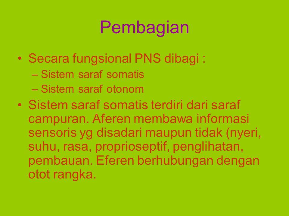 Pembagian Secara fungsional PNS dibagi : –Sistem saraf somatis –Sistem saraf otonom Sistem saraf somatis terdiri dari saraf campuran. Aferen membawa i