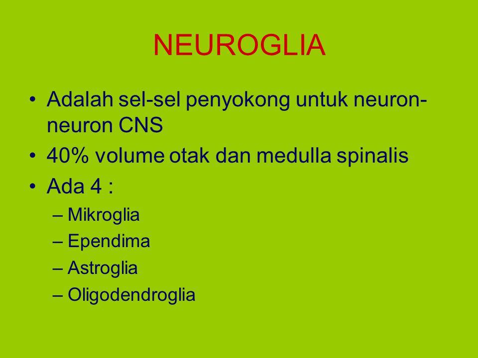 NEUROGLIA Adalah sel-sel penyokong untuk neuron- neuron CNS 40% volume otak dan medulla spinalis Ada 4 : –Mikroglia –Ependima –Astroglia –Oligodendrog