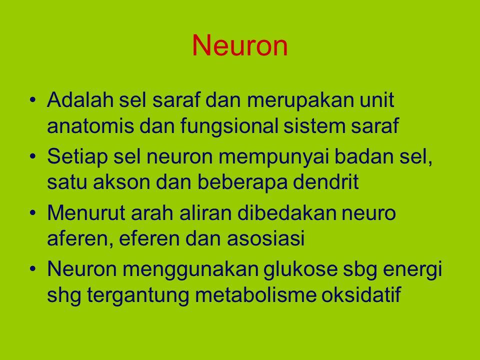 Neuron Adalah sel saraf dan merupakan unit anatomis dan fungsional sistem saraf Setiap sel neuron mempunyai badan sel, satu akson dan beberapa dendrit