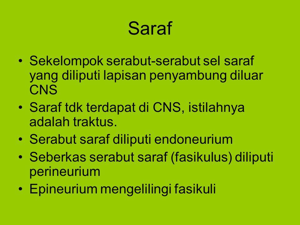 Saraf Sekelompok serabut-serabut sel saraf yang diliputi lapisan penyambung diluar CNS Saraf tdk terdapat di CNS, istilahnya adalah traktus. Serabut s