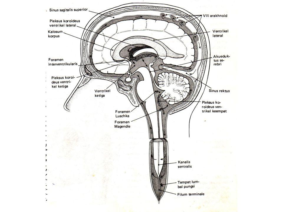 Sistem ventrikel dan cairan serebrospinalis Cairan serebrospinalis disekresi oleh pleksus koroid, sebagian besar oleh pleksus di ventrikel lateral Memasuki ruang subarachnoid melalui foramen Luschka dan Magendie Sirkulasi keatas mengitari otak dan kebawah mengitari medulla spinalis CSS jernih seperti air, mengandung sangat sedikit sel dan sedikit protein Di resorbsi di villi arachnoidalis ke dalam sinus- sinus duralis