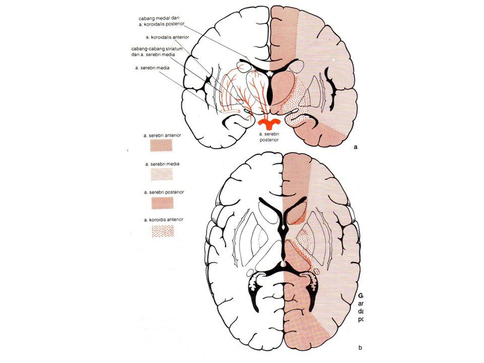 Daerah-daerah fungsional korteks serebri Brodman,neuropsikiatri bangsa Jerman th 1909 menyusun peta korteks serebri Korteks serebri dibagi menjadi 47 daerah berdasarkan struktur seluler Korteks serebri mempunyai daerah-daerah primer dan asosiasi Daerah primer adalah daerah dimana terjadi persepsi atau gerakan Daerah asosiasi digunakan untuk integrasi dan menanggapi tingkah laku yang lebih tinggi
