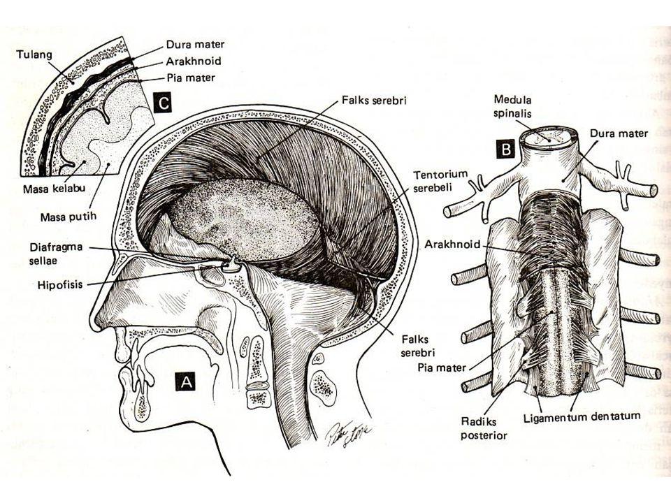 Pembagian otak utama I.Telensefalon II.Diensefalon III.Mesensefalon IV.Metensefalon V.Mielensefalon