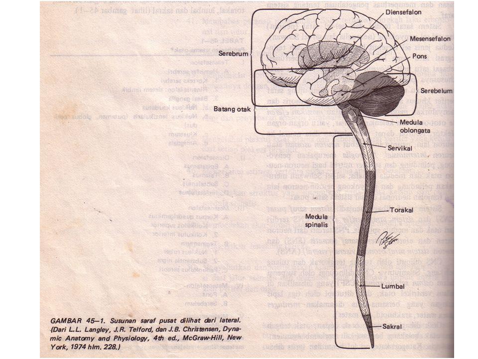 Telensefalon A.Hemisfer serebri : 1.Korteks serebri 2.Rinensefalon : sistem limbik 3.Basal ganglia a)Nukleus kaudatus b)Nukleus lentikularis (putamen, globus palidus) c)Klustrum d)Amigdala