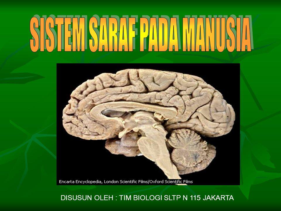 DISUSUN OLEH : TIM BIOLOGI SLTP N 115 JAKARTA