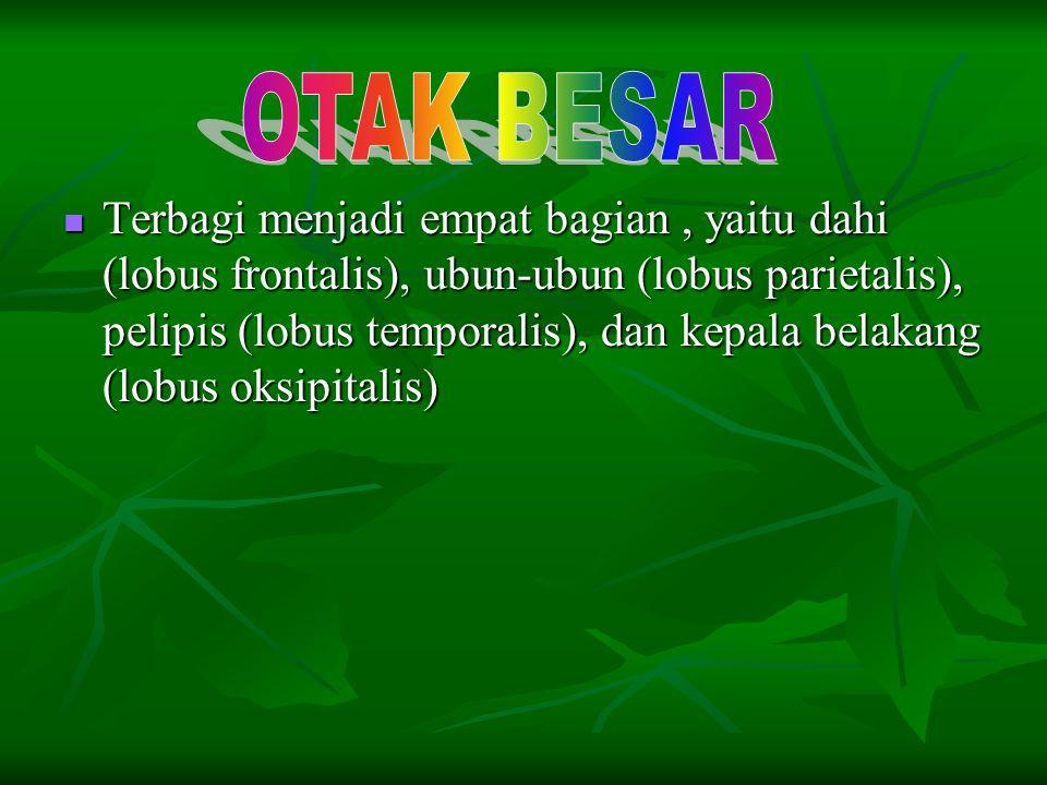 Terbagi menjadi empat bagian, yaitu dahi (lobus frontalis), ubun-ubun (lobus parietalis), pelipis (lobus temporalis), dan kepala belakang (lobus oksip