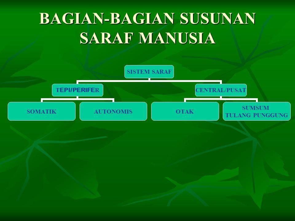 BAGIAN-BAGIAN SUSUNAN SARAF MANUSIA SISTEM SARAF T EPI/PERIFE R SOMATIKAUTONOMIS CENTRAL/PUSAT OTAK SUMSUM TULANG PUNGGUNG