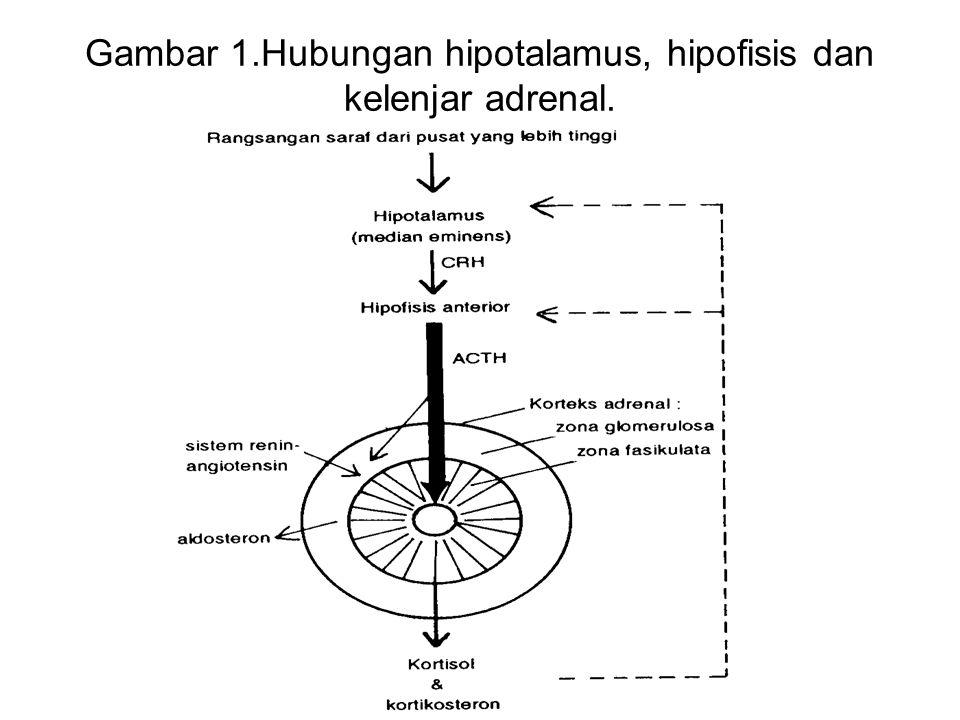 2.3.MEKANISME KERJA Kortikosteroid bekerja dg mempengaruhi kecepatan sintesis protein.