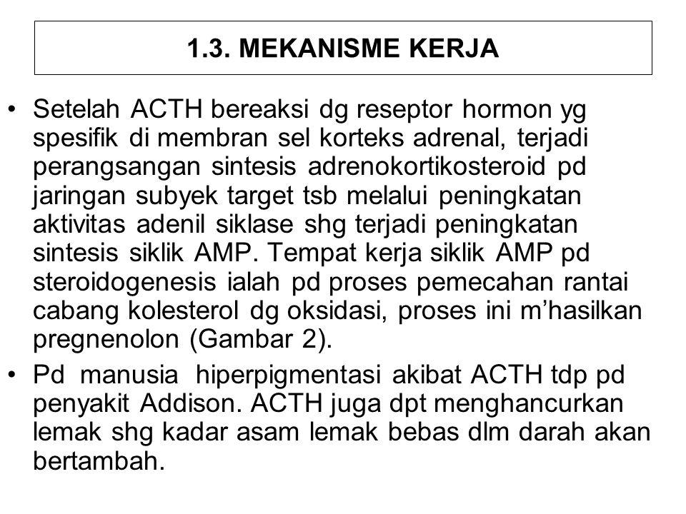 1.3. MEKANISME KERJA Setelah ACTH bereaksi dg reseptor hormon yg spesifik di membran sel korteks adrenal, terjadi perangsangan sintesis adrenokortikos