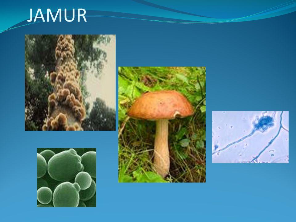 Penyebab roti berjamur Tubuhnya terdiri dari hifa yang tidak bersekat Alat reproduksi seksual: zigosporangium Habitat: terestrial, saprofit pada makanan, tanah, sisa makhluk hidup Reproduksi aseksual: fragmentasi&spora Reproduksi seksual: membentuk zigospora Penyebab roti berjamur Tubuhnya terdiri dari hifa yang tidak bersekat Alat reproduksi seksual: zigosporangium Habitat: terestrial, saprofit pada makanan, tanah, sisa makhluk hidup Reproduksi aseksual: fragmentasi&spora Reproduksi seksual: membentuk zigospora