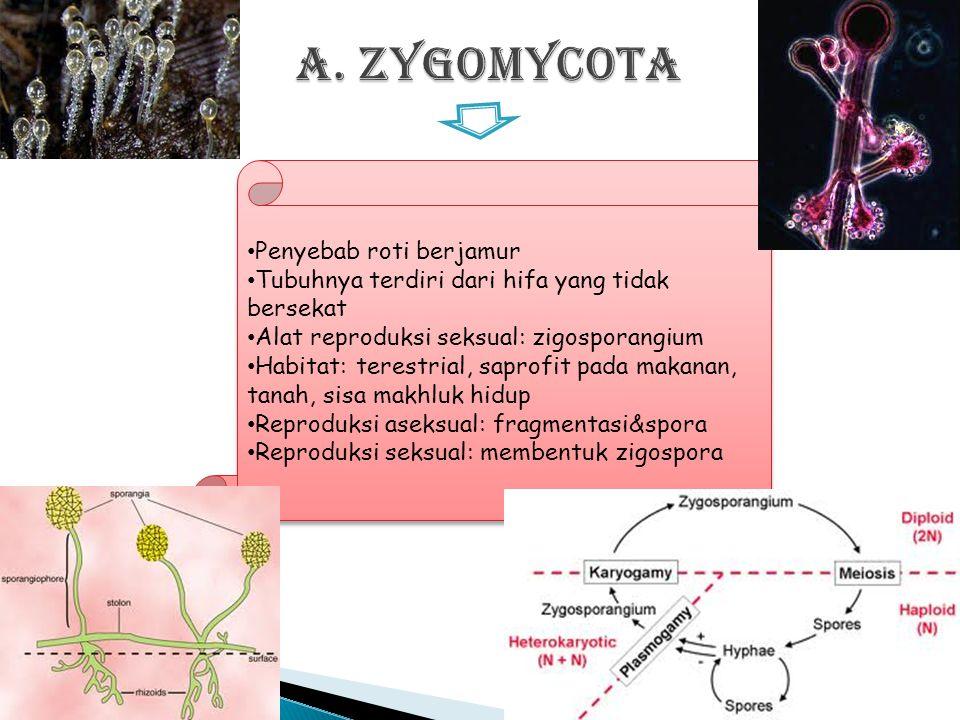  Berdasarkan cara reproduksi dan struktur tubuhnya, jamur diklasifikasikan menjadi 4 subdivisi, yaitu : ◦ Zygomycotina ◦ Ascomycotina ◦ Basidiomycoti
