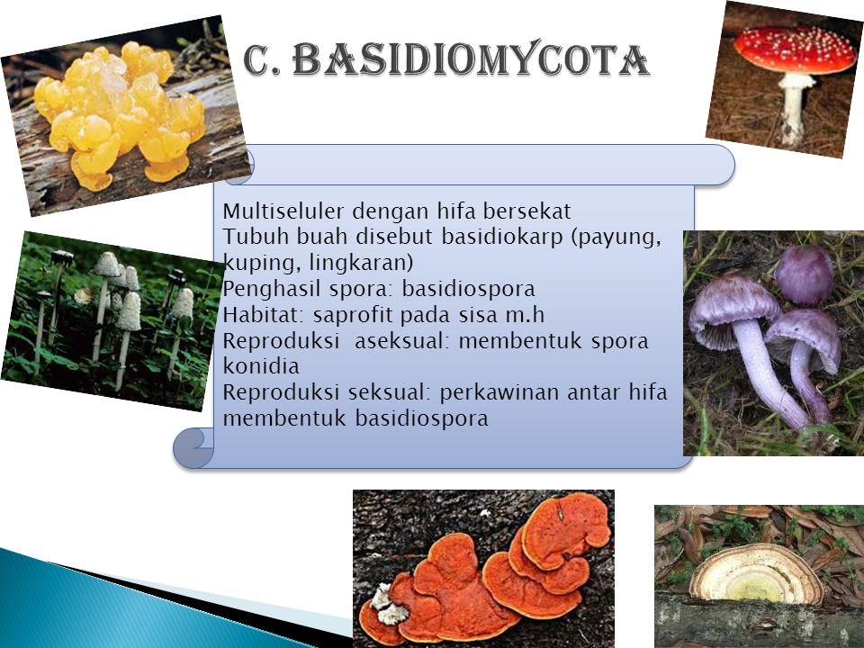 Penicillium chrysogenumPenicillium camemberti Penicillium roqueforti Sacharomyces cerevisae Neurospora sitophila