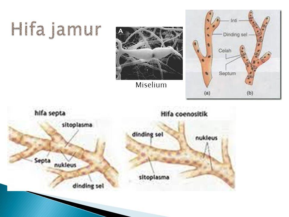UKURAN: Mikroskopik makroskopik Uniseluler multiseluler Uniseluler multiseluler S t r u k t u r d a n f u n g s i t u b u h : E u k a r i o t i k T i