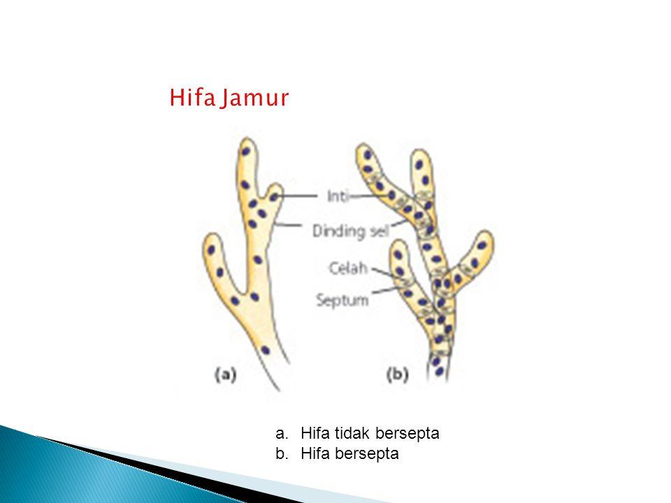  Ciri – ciri : ◦ Hidup: parasit, saprofit, bersimbiosis dengan ganggang membentuk Lichenes (Lumut kerak) ◦ Uniseluler dan multiseluler ◦ hifa bersekat melintang, bercabang – cabang dan berinti banyak ◦ dinding sel mengandung kittin ◦ reproduksi aseksual dengan membentuk kuncup, fragmentasi dan pembentukan konidia ◦ reproduksi seksual dengan membentuk spora askus ◦ Contoh spesies: 1.Sacharomyces cerevisae atau ragi :bir, roti, alkohol, mengubah glukosa menjadi alkohol dan CO2 (fermentasi).