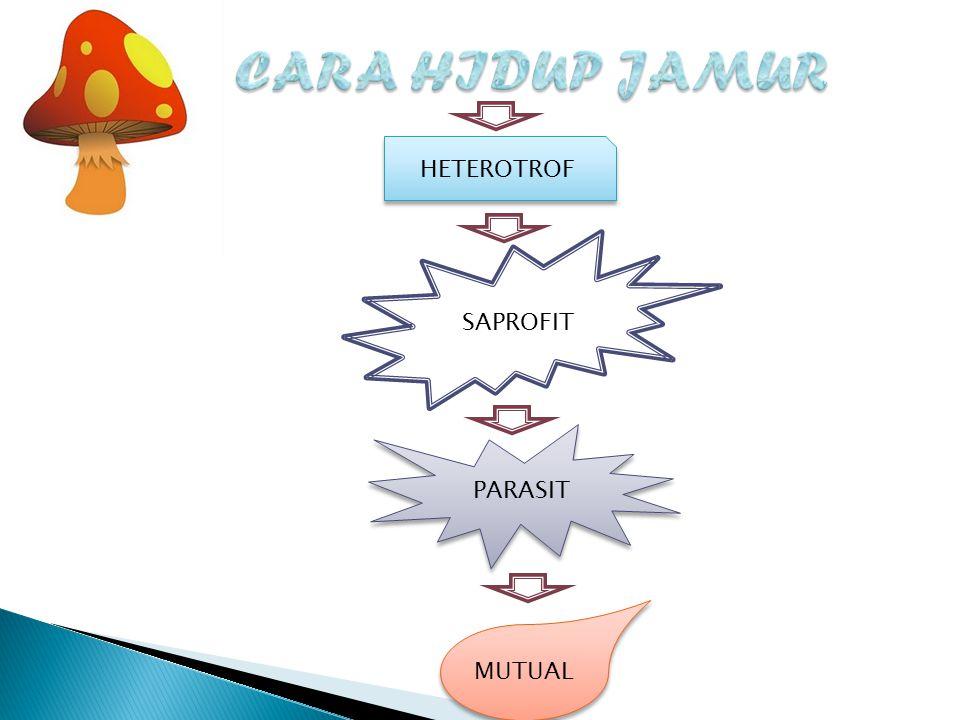 HETEROTROF SAPROFIT PARASIT PARASIT MUTUAL