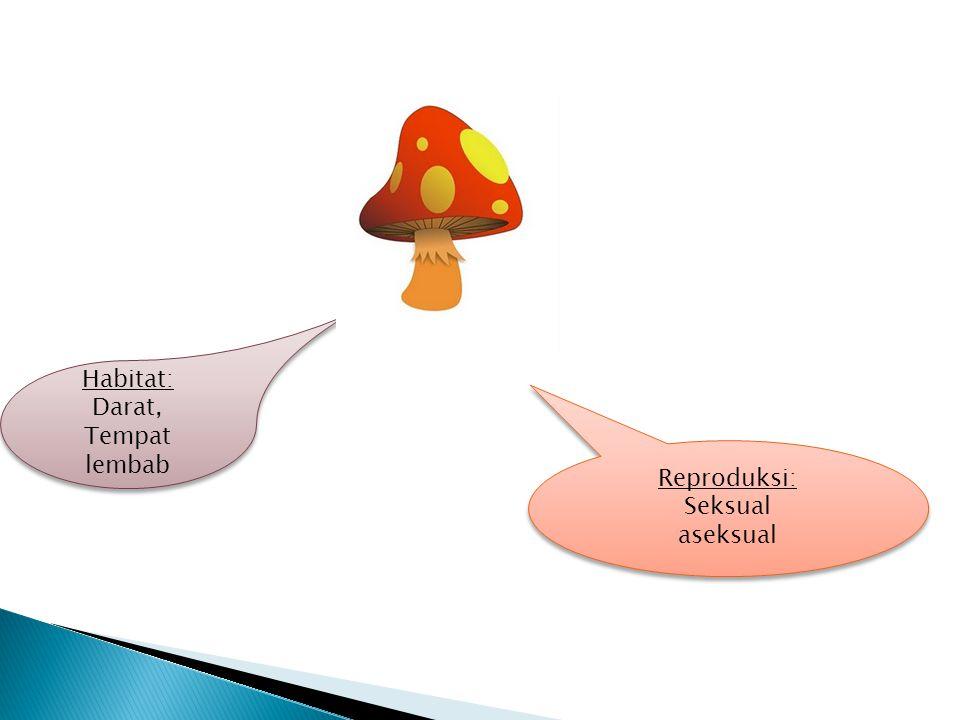Habitat: Darat, Tempat lembab Habitat: Darat, Tempat lembab Reproduksi: Seksual aseksual Reproduksi: Seksual aseksual