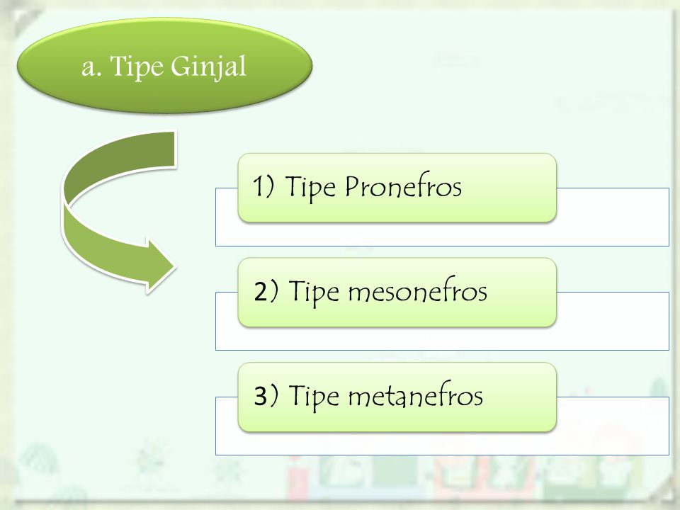 a. Tipe Ginjal 1) Tipe Pronefros 2 ) Tipe mesonefros 3 ) Tipe metanefros