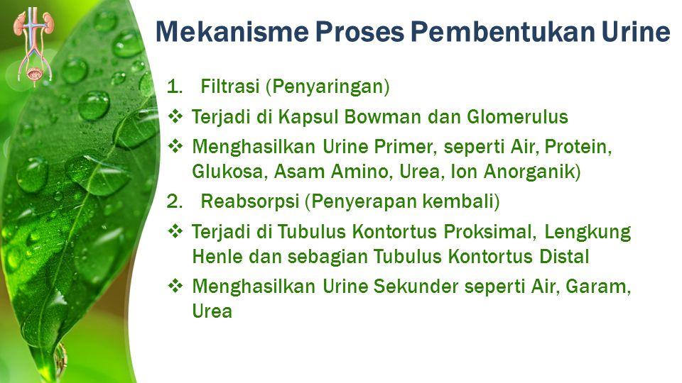 Mekanisme Proses Pembentukan Urine 1.Filtrasi (Penyaringan)  Terjadi di Kapsul Bowman dan Glomerulus  Menghasilkan Urine Primer, seperti Air, Protei