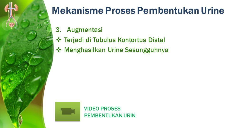 Mekanisme Proses Pembentukan Urine 3.Augmentasi  Terjadi di Tubulus Kontortus Distal  Menghasilkan Urine Sesungguhnya VIDEO PROSES PEMBENTUKAN URIN