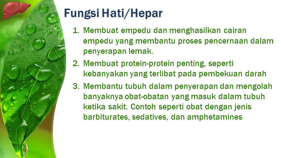 1.Membuat empedu dan menghasilkan cairan empedu yang membantu proses pencernaan dalam penyerapan lemak. 2.Membuat protein-protein penting, seperti keb