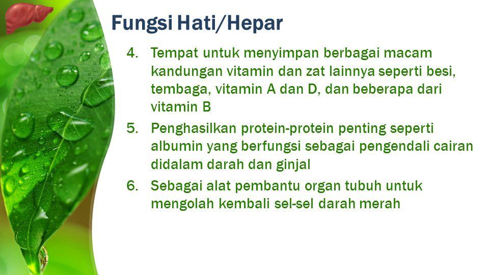 4.Tempat untuk menyimpan berbagai macam kandungan vitamin dan zat lainnya seperti besi, tembaga, vitamin A dan D, dan beberapa dari vitamin B 5.Pengha