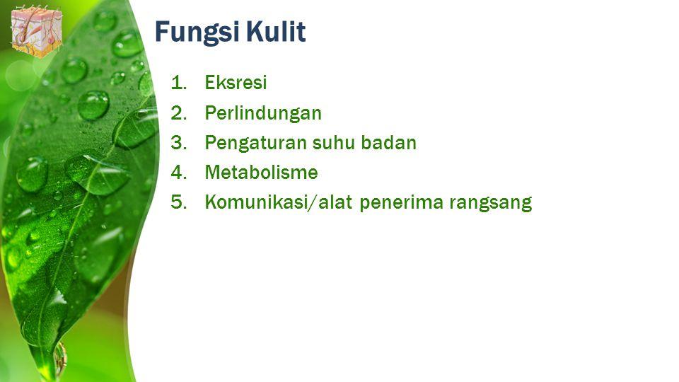 Fungsi Kulit 1.Eksresi 2.Perlindungan 3.Pengaturan suhu badan 4.Metabolisme 5.Komunikasi/alat penerima rangsang