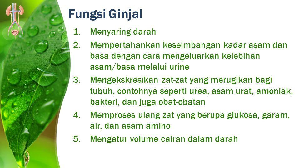 Fungsi Ginjal 1.Menyaring darah 2.Mempertahankan keseimbangan kadar asam dan basa dengan cara mengeluarkan kelebihan asam/basa melalui urine 3.Mengeks