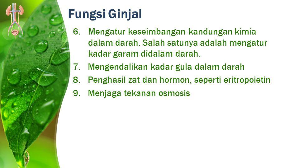 Fungsi Ginjal 6.Mengatur keseimbangan kandungan kimia dalam darah. Salah satunya adalah mengatur kadar garam didalam darah. 7.Mengendalikan kadar gula