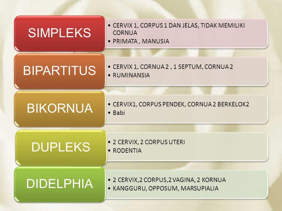 CERVIX 1, CORPUS 1 DAN JELAS, TIDAK MEMILIKI CORNUA PRIMATA, MANUSIA SIMPLEKS CERVIX 1, CORNUA 2, 1 SEPTUM, CORNUA 2 RUMINANSIA BIPARTITUS CERVIX1, CO