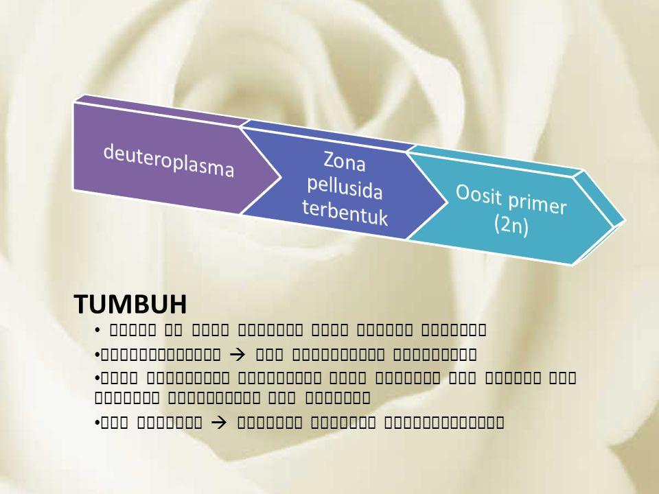 TUMBUH Tahap in baru dimulai saat dewasa kelamin Deuteroplasma  isi sitoplasma bertambah Zona pellusida terbentuk dari membran sel plasma dan terjadi