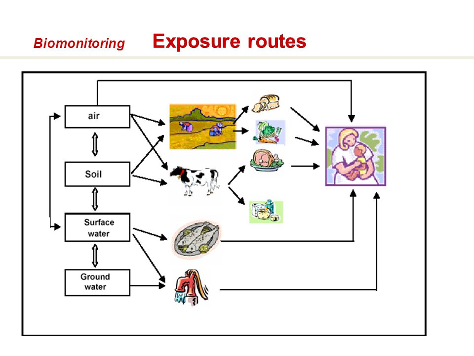 54 Biomonitoring Exposure routes