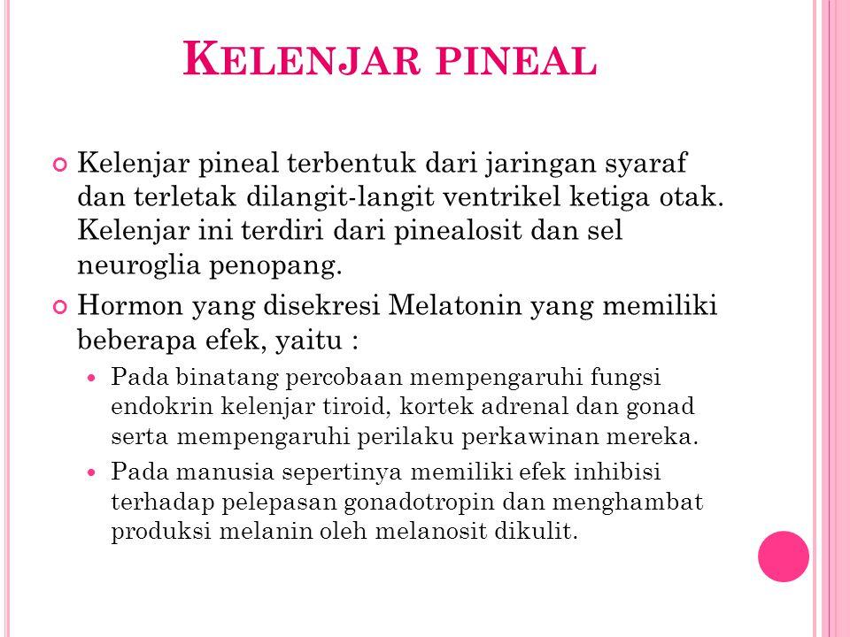 K ELENJAR PINEAL Kelenjar pineal terbentuk dari jaringan syaraf dan terletak dilangit-langit ventrikel ketiga otak. Kelenjar ini terdiri dari pinealos