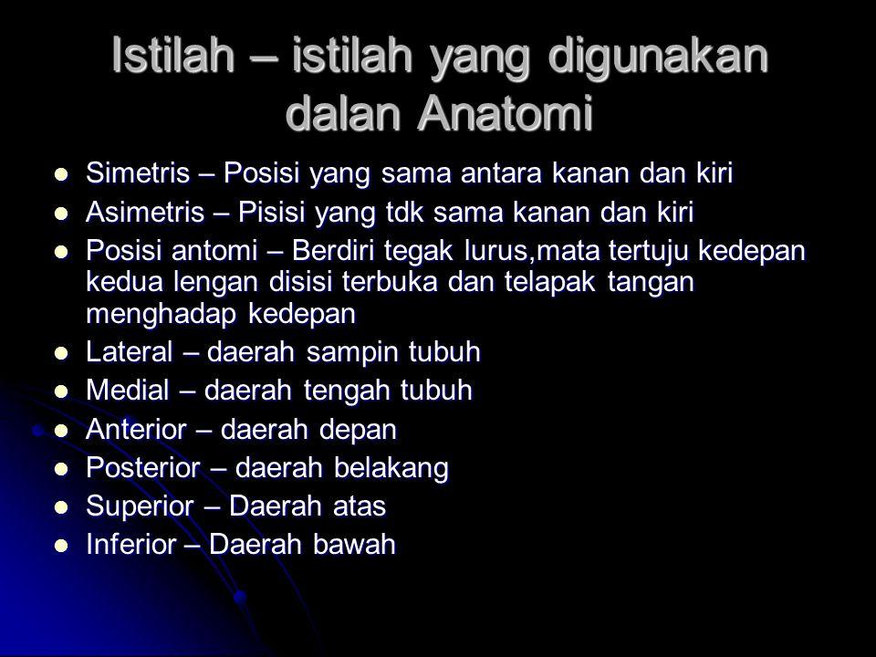 Istilah – istilah yang digunakan dalan Anatomi Simetris – Posisi yang sama antara kanan dan kiri Simetris – Posisi yang sama antara kanan dan kiri Asi