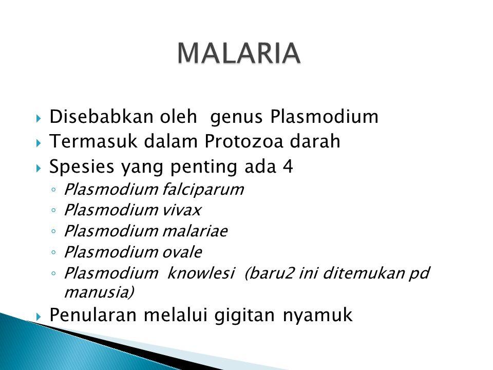 24 MASALAH 1. 1. Persepsi masyarakat  malaria dianggap penyakit biasa (kena wisa, sanggah, penyakit kuning). 2.2. Belum semua Mikroskopis PKM dilatih