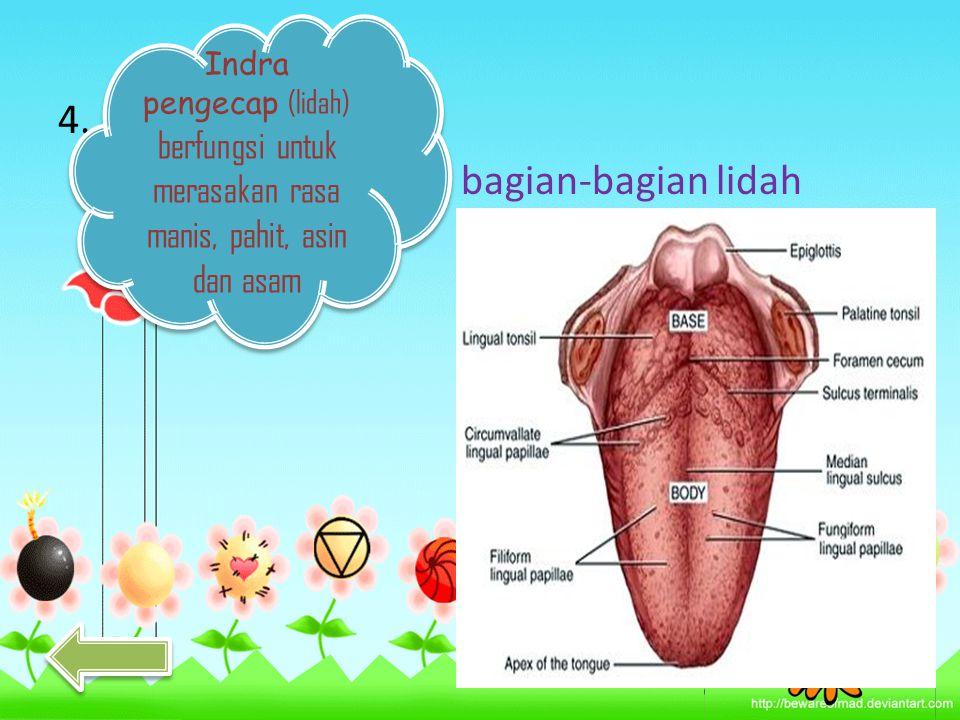 5. Indra Peraba (kulit) kita dapat merasakan suatu benda kasar, halus, panas, atau digin