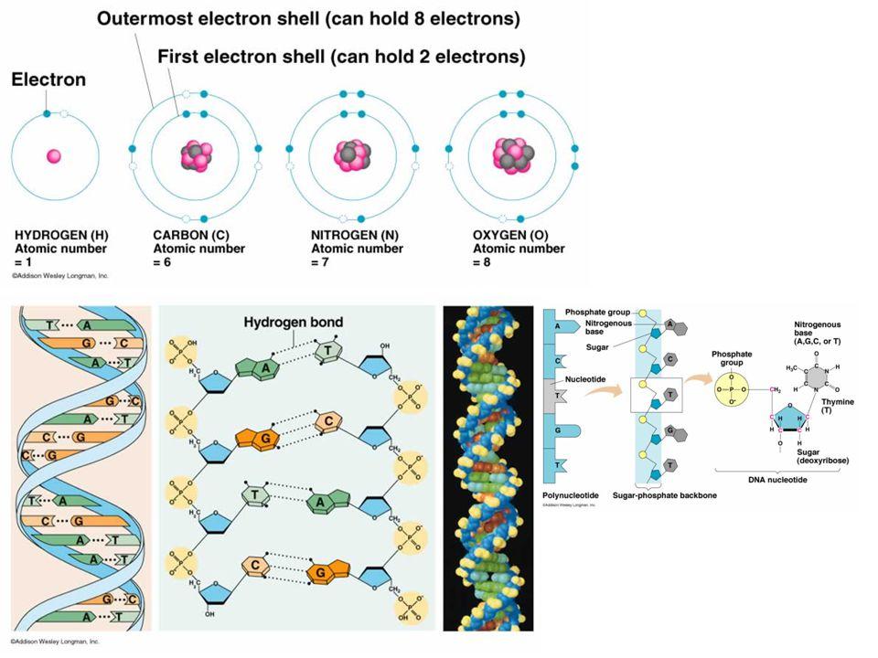 Pemanfaatan Isotop Radioaktif Berguna dalam penelitian biologi Berfungsi sebagai mata-mata Sebagai bahan labeling proses metabolisme Teknik autoradiografi