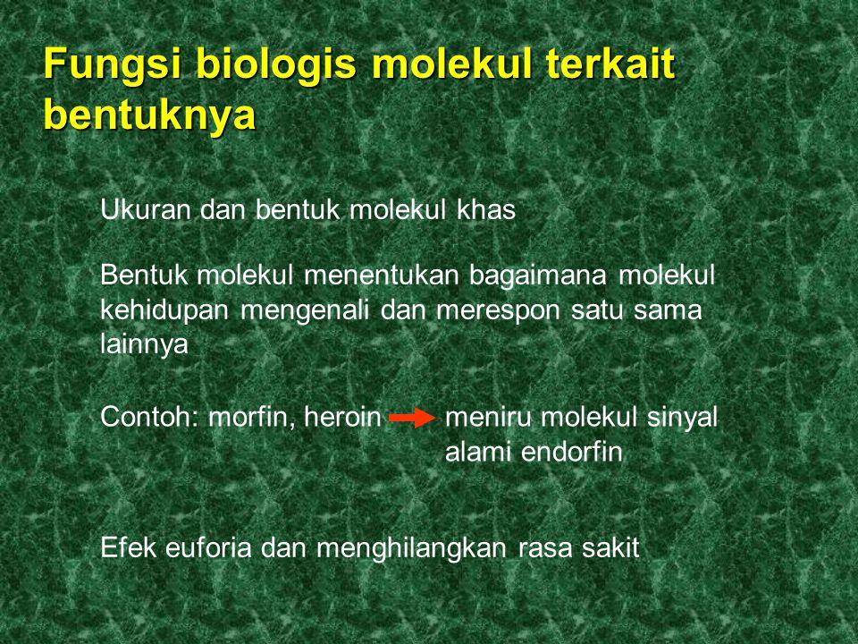 Fungsi biologis molekul terkait bentuknya Ukuran dan bentuk molekul khas Bentuk molekul menentukan bagaimana molekul kehidupan mengenali dan merespon