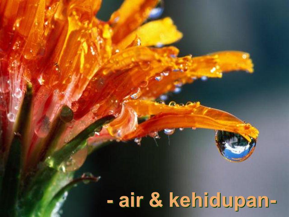 - air & kehidupan- - air & kehidupan-