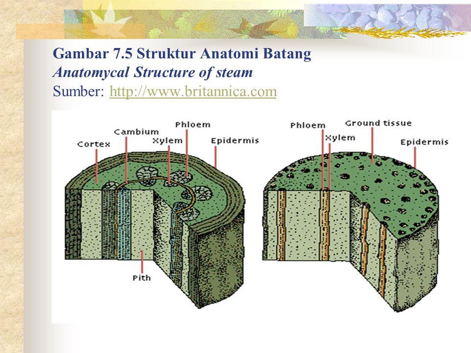 Gambar 7.5 Struktur Anatomi Batang Anatomycal Structure of steam Sumber: http://www.britannica.comhttp://www.britannica.com