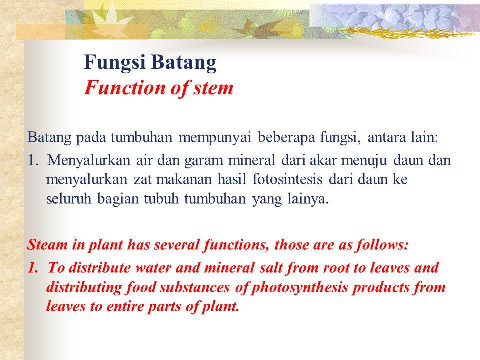 Fungsi Batang Function of stem Batang pada tumbuhan mempunyai beberapa fungsi, antara lain: 1. Menyalurkan air dan garam mineral dari akar menuju daun