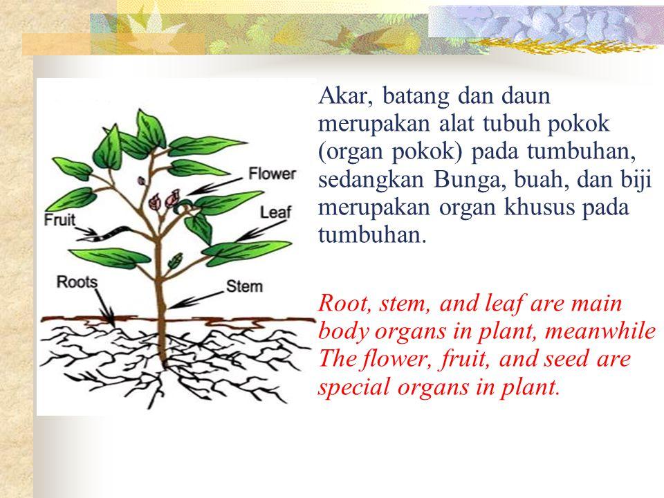 Akar, batang dan daun merupakan alat tubuh pokok (organ pokok) pada tumbuhan, sedangkan Bunga, buah, dan biji merupakan organ khusus pada tumbuhan. Ro