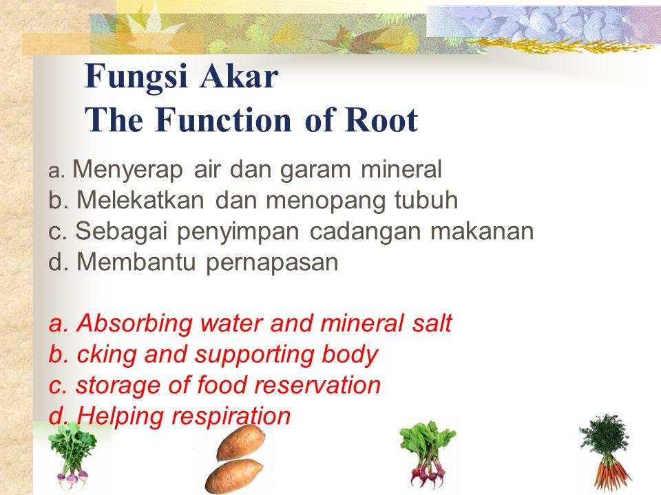 Fungsi Akar The Function of Root a. Menyerap air dan garam mineral b. Melekatkan dan menopang tubuh c. Sebagai penyimpan cadangan makanan d. Membantu