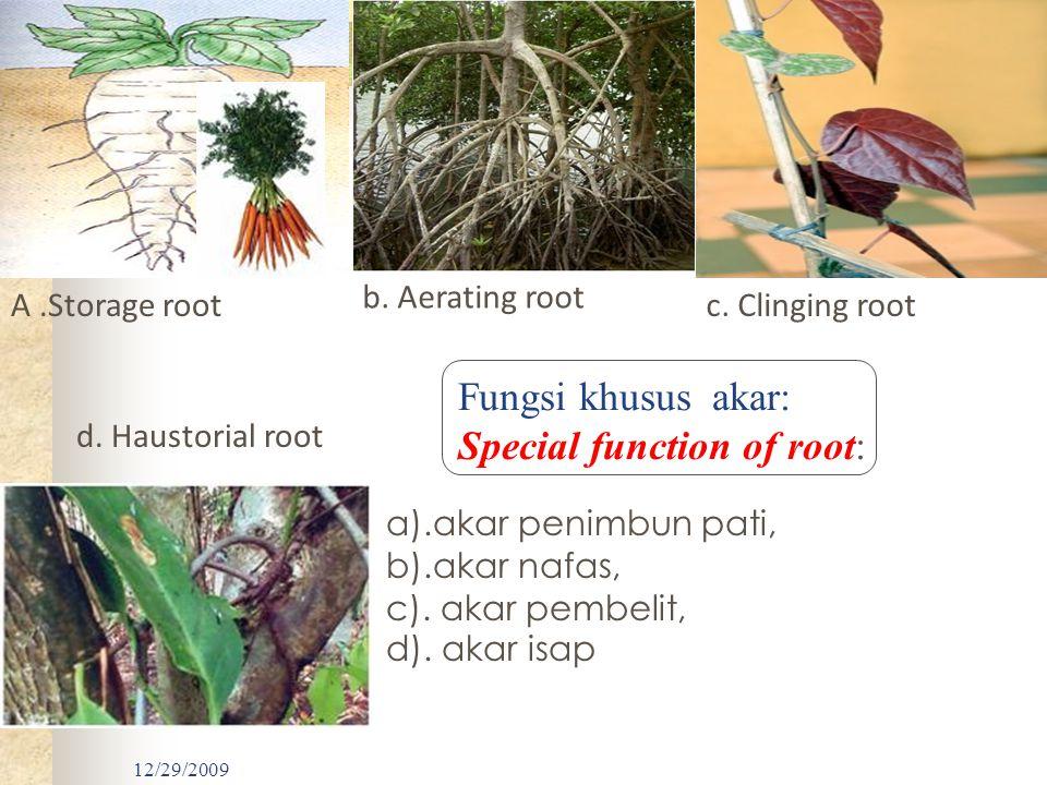 12/29/2009 a).akar penimbun pati, b).akar nafas, c). akar pembelit, d). akar isap Gambar 3. Beberapa modifikasi akar. A.Storage root b. Aerating root