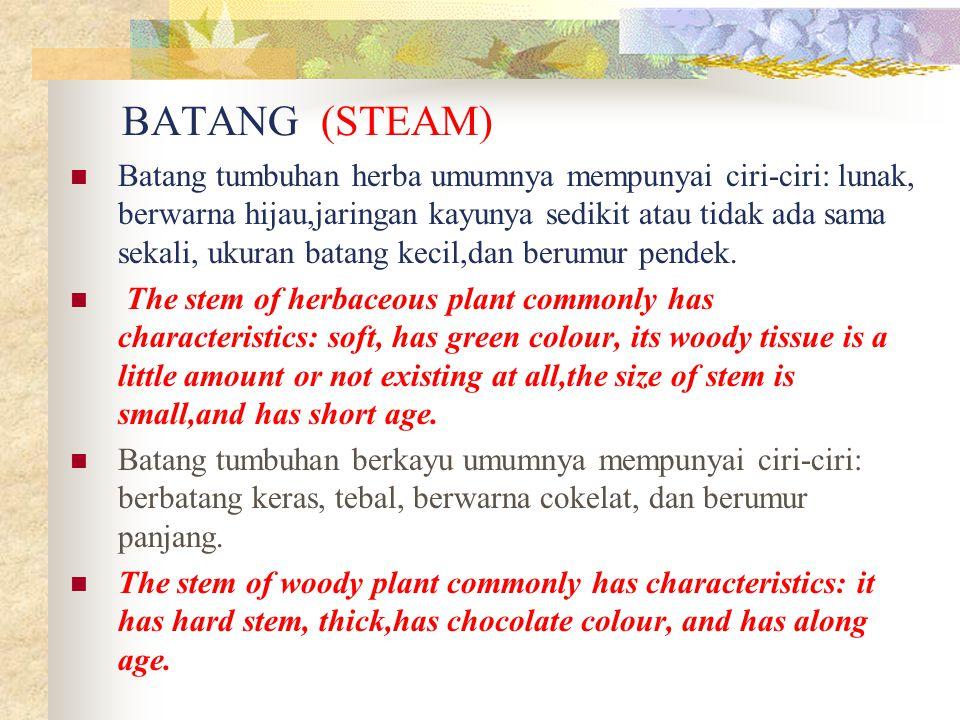 Batang tumbuhan herba The stem of herbaceous plant http://images.google.co.id Batang tumbuhan berkayu The stem of woody plant http://images.google.co.id Lenti Sel