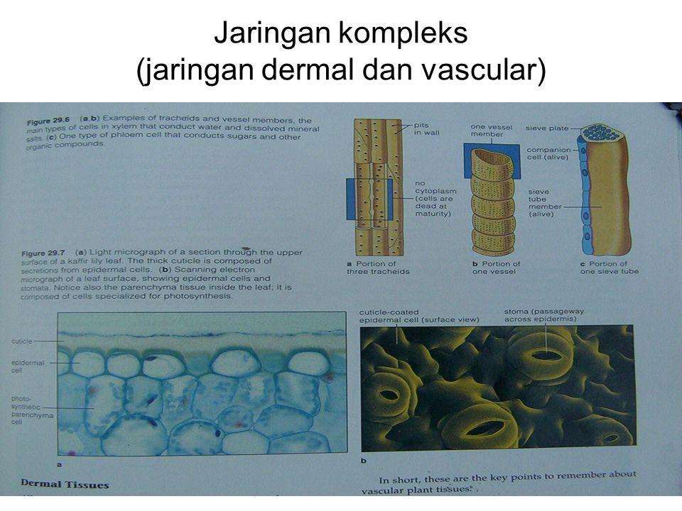 Jaringan kompleks (jaringan dermal dan vascular)